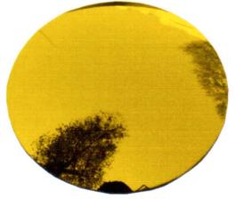 Dorado Espejo